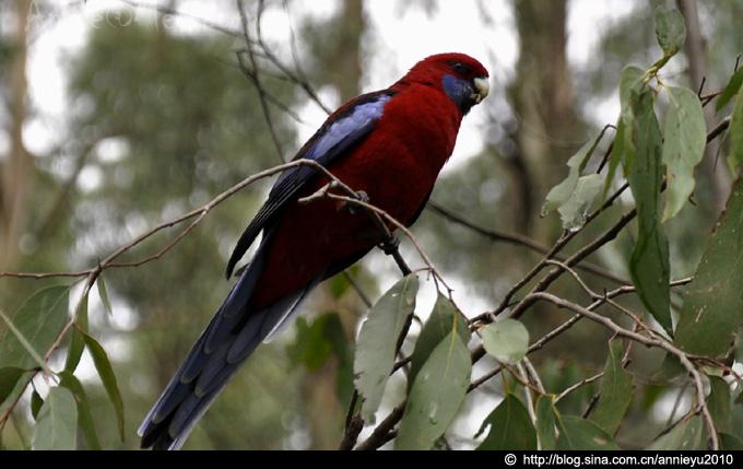 在澳大利亚与动物狂欢(中)-Animals Encounter@Mel-2 - 鱼儿 - 鱼儿的遨游生活