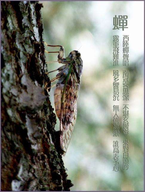 http://album.sina.com.cn/pic/485fe2d543fd04d2efbeb
