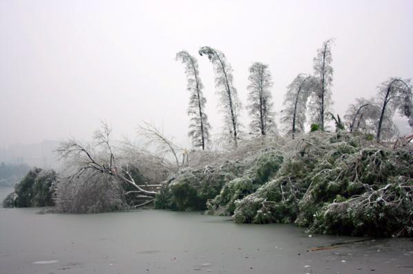 [原创]雪之过——冰灾记忆之二 - 歪树 - 歪树