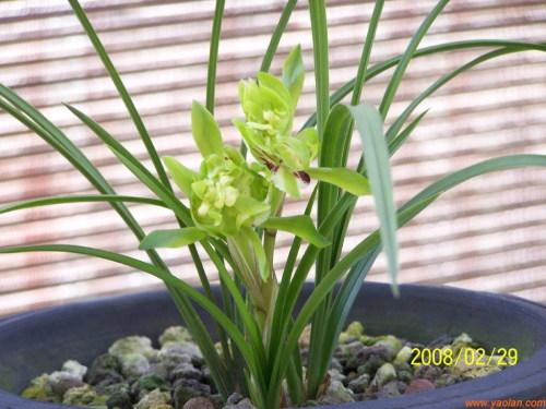 ◆与兰花草为邻 - lygqihongling - 清荷铃子