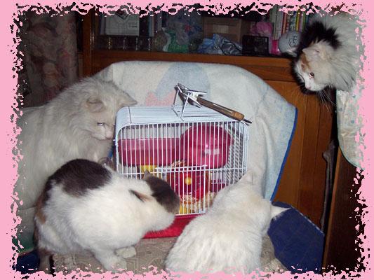 猫和老鼠 - 吾乐乐 - 爱猫札记