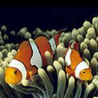 馨香漫溢的情怀(转载  梅寒) - 在水中的小鱼 - 在 水 中 的 小 鱼