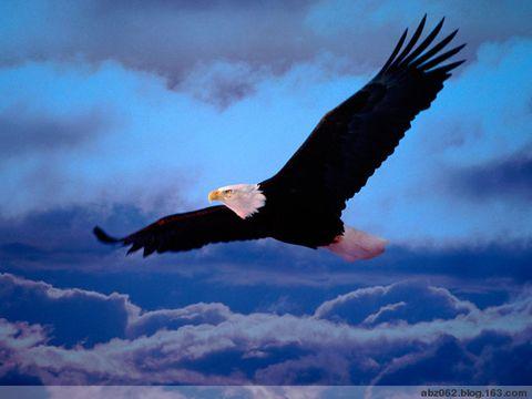鹰之命 - 艾之宁耶 - 自由与和平.博客精神---艾之宁耶