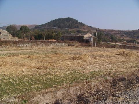 温岭市果树地方种质资源保存与繁育中心建设地点选址 - 清扬 - 花果飘香