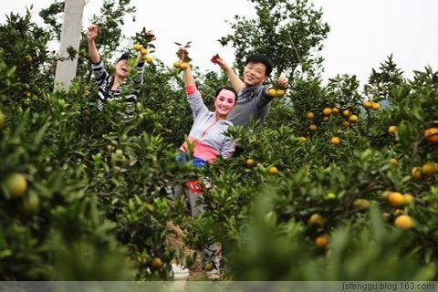 发挥技术优势 拓展使用范围  - 江苏省丰谷种业有限公司 - 江苏省丰谷种业有限公司