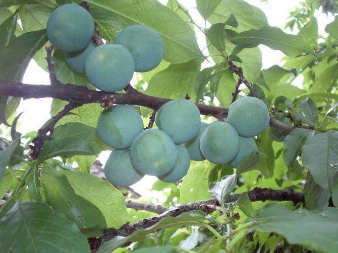 [引用】水果的药理作用 - 狂风 - ldj狂风 的博客