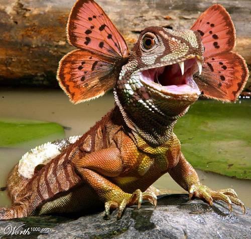 引用 世界上最怪异的动物(保证你没见过) - 快乐老头 - liangdahuai2008的博客