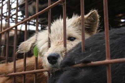 挥泪告别病重狗狗! - 亚洲动物基金 - 亚洲动物基金
