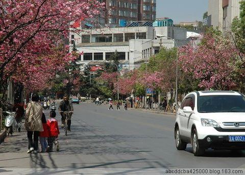 樱花盛开在昆明 - MING - MING-BLOG