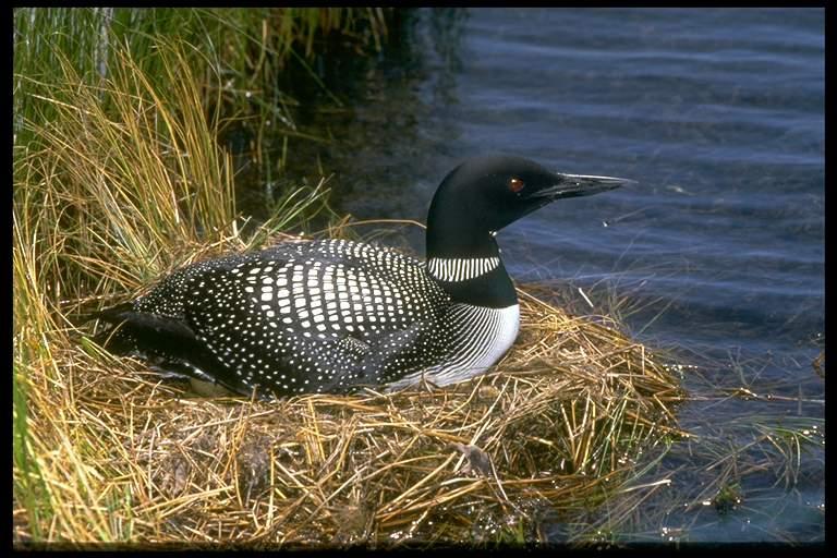 精美图片欣赏-可爱的鸟类 - 沉默是金 -    沉默是金博客