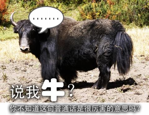 引用 【藏文学习笔记04:就算明天死,今天也要学习】 - 扎西多吉 - 八吉祥