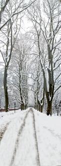 [原创]    一张雪景照片的制作过程