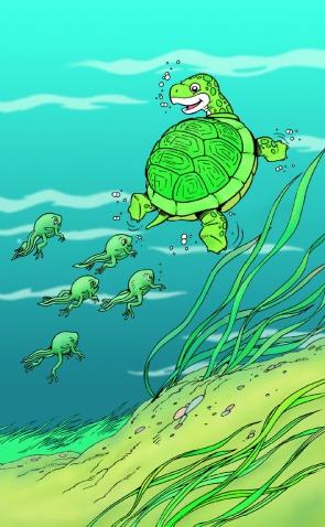 小蝌蚪的成长过程