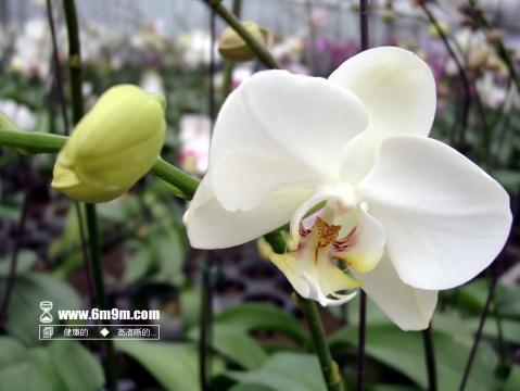 记忆转载(2007.07) - 朵儿 - 朵儿