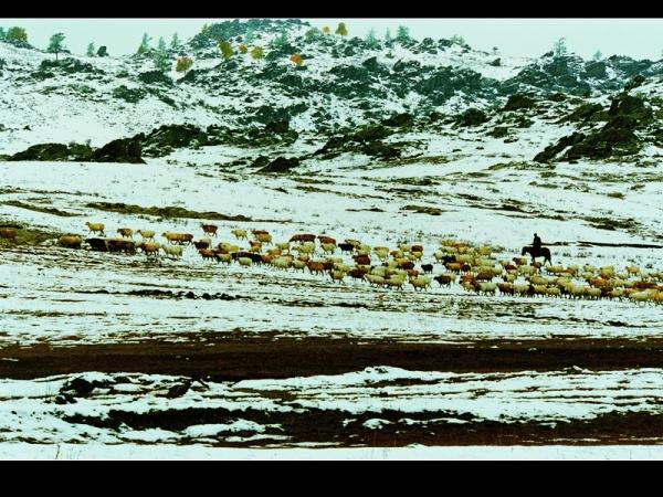[原创]神圣芳草地---爱的奉献(5) - 雪山老人 - 雪山老人的博客