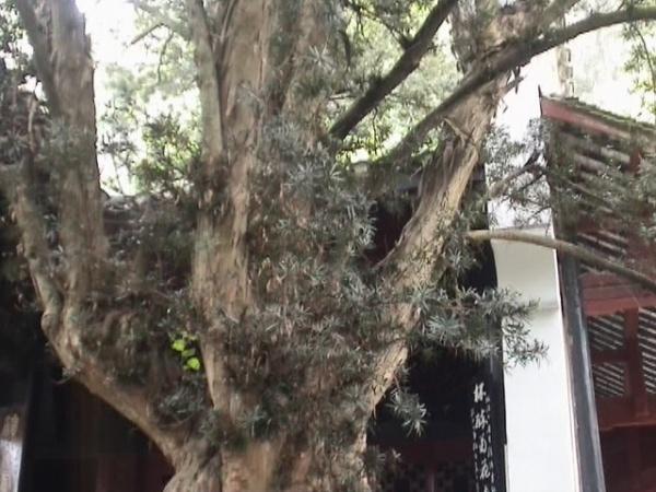 [原创]春游桃花源 - 雪颜 - 雪颜的博客