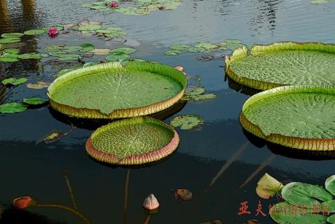 (原摄)苏州的荷塘月色 - 高山长风 - 亚夫旅游摄影博客
