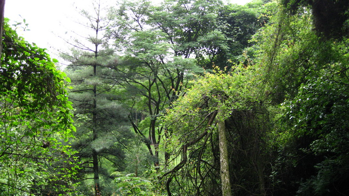 西山 - moon - 采菊东篱下 悠然见南山
