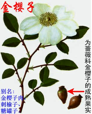引用 中草药图谱 - 借庐禅 - yangbw518的博客
