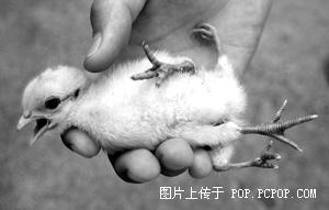 关于肯德基看了让你心惊肉跳!为了祖国的下一代,看完请务必转载!!谢~ - huanglujian912 - huanglujian912的博客