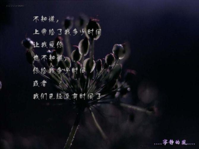 彼岸花花语 - 白&狐的日志