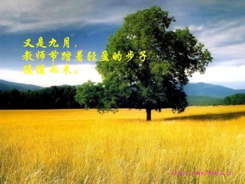 引用 献给第23个教师节!【图文】 - 别样天空 - 让生命如花儿绽放