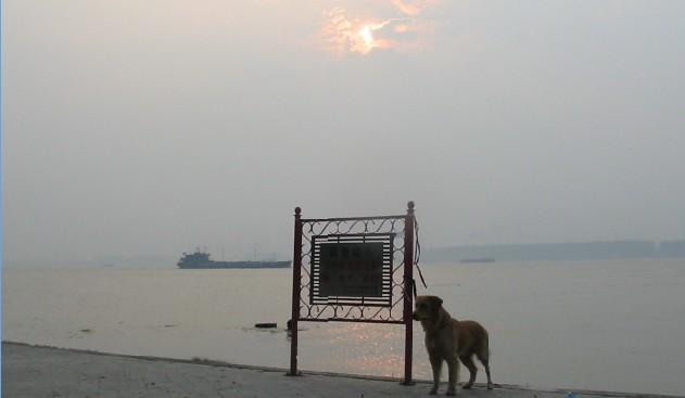 江滩的早晨 - 清清百合 - qqbh温馨小屋