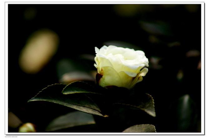 常给自己也给别人一个微笑 - 日月明 - tfxin.yu 的博客