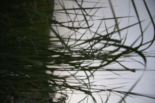 落日(外几张) - xt5999995 - 赵文河的博客