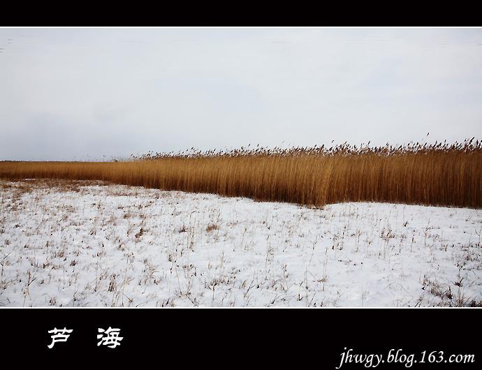 [原]走向寒冷——芦海 - 生有所息 - 生有所息