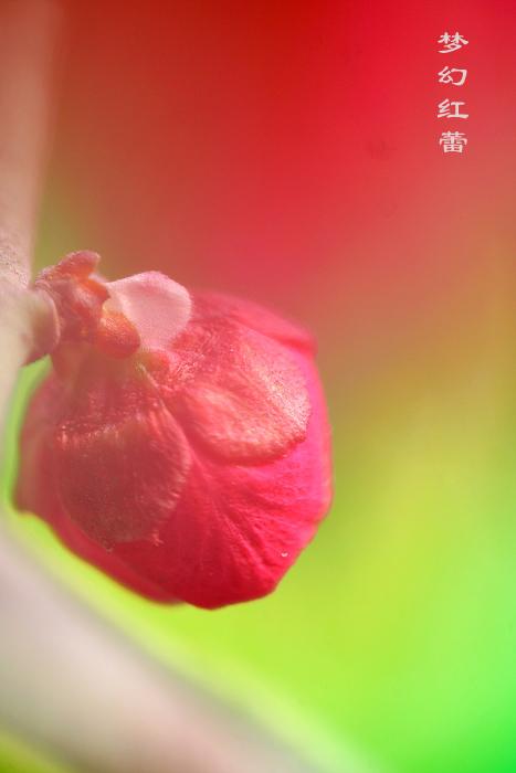 梅 - xuebaimeihong - 红藕飘香