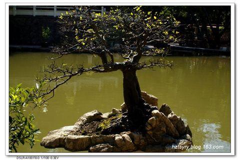 深圳仙湖盆景园 - 汝裕有约 -