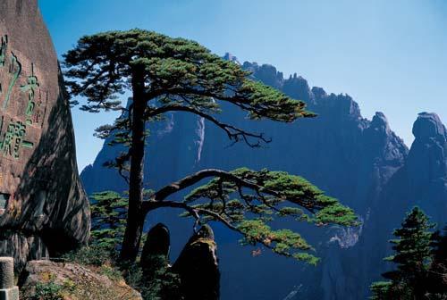 我心中最具魅力的世界文化遗产——黄山 - 中华遗产 - 《中华遗产》
