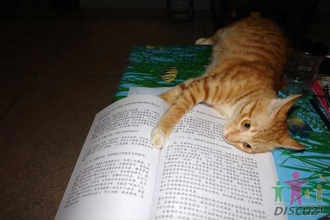 [引用]一只猫的学佛历程 - 芥末子 - 我的博客