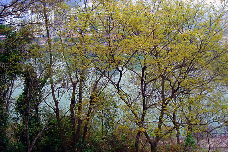 [原创]春天来了 - 歪树 - 歪树