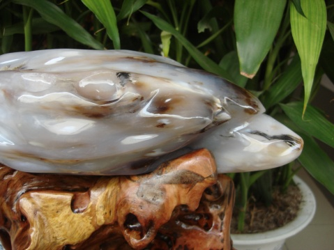 【转载】白海豚草花(苔藓类化玉) - huyming168 - 精诚电子