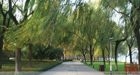 【原创】菊花(即拍即登)(2008年11月19日) - 吴山狗崽(huangzz) - 吴山狗崽欢迎您的来访 Wushan