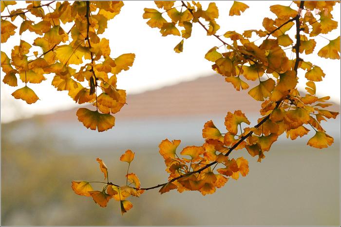 [原创]几片秋叶 - 迁徙的鸟 - 迁徙鸟儿的湿地