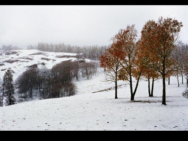 [原创]神圣芳草地---爱的奉献(2) - 雪山老人 - 雪山老人的博客