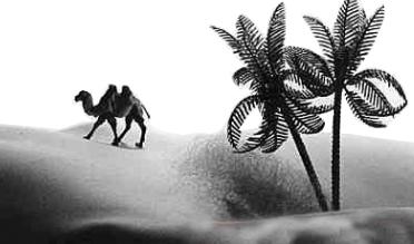 极地之旅 - 温柔细雨 - 一丝小雨盈盈而落......