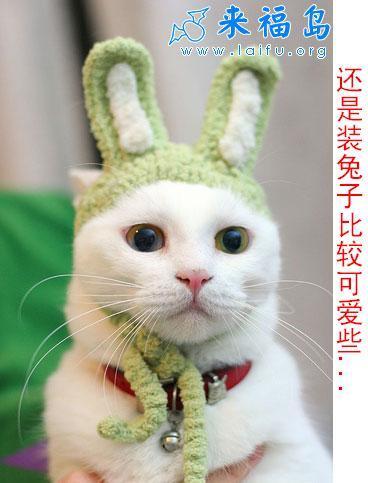 兔兔很可爱~ - 小红花 - 小红花
