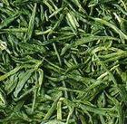二十种中国名茶鉴赏方法 - 独孤山人 - 独孤山人的博客