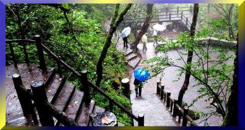 雨中神农 - 66 - 66的小屋