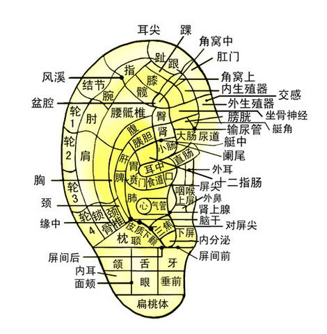 人体穴位图集成 - 亻弗的日志 - 网易博客 - 谦谦 - simaxiujun姊妹的博客