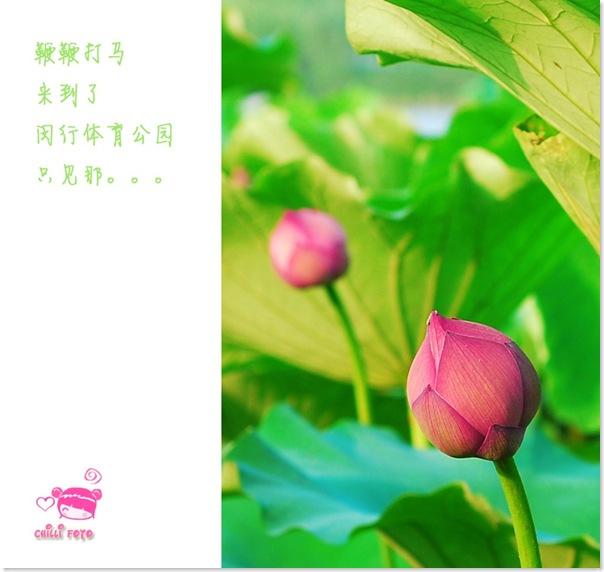 DSC_0583副本
