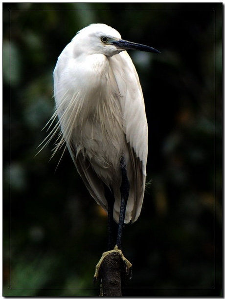 (原创)园鸟的Pose - 鱼笑九天 - 鱼笑九天