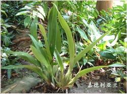 植物精美图谱600种(八) - 香儿的日志 - 网易博客 - 文阁绘画工作室 - yangwenge923 的博客