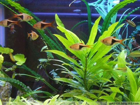 荷花塘中欢乐的小鱼 - 六月荷花 - 六 月 荷 塘