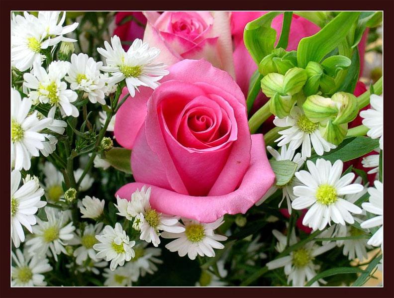 引用  鲜花送给屏前的你 - 梧桐树 - 梧桐树的博客