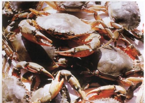 2007-10-03 | 国庆佳节忆往事(二)-----------漂篮里的缤纷多彩。  - 经济半小时 - jingjitime的博客